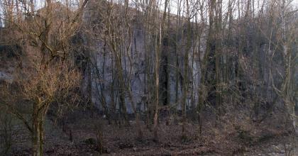 Jęzory ukryte wśród drzew i krzaków.