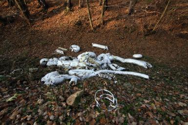 Śmieci w Dolinie Będkowskiej